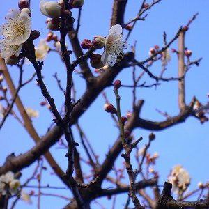 「初春の慶び」