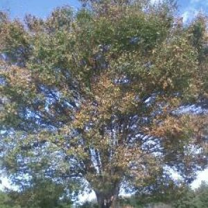「秋の庄内緑地公園」
