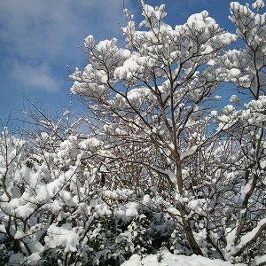 「美しい雪」