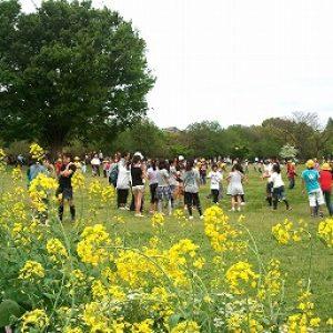 「新緑の緑地公園」