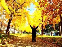 黄金色の銀杏と和平さん2s-
