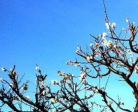 02-28 梅の花s-
