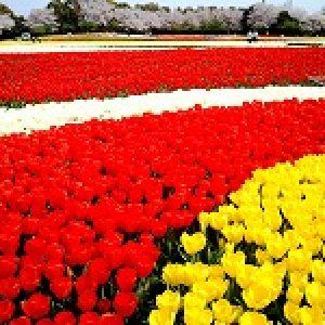 「春は花散歩」